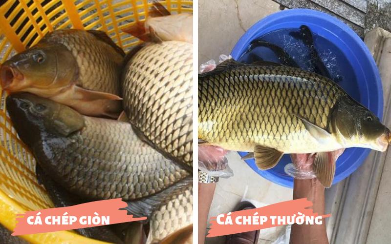 Bật mí 3 cách chế biến cá chép giòn tại nhà cực hấp dẫn