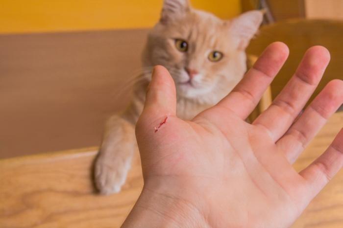 [Mơ bị mèo cắn] vào tay, vào chân, chảy máu điềm báo gì?
